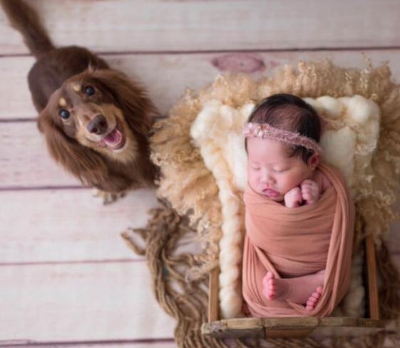 新生兒寫真❤️寶寶的第一份禮物🎁黑羊方新生兒寫真