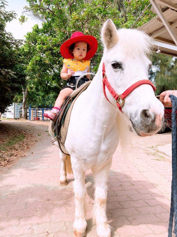 台南騎馬帥氣在海邊和草地上漫步!還能餵馬兒和羊群|小孩也能乘上可愛的迷你馬❤ |台南市立馬術場