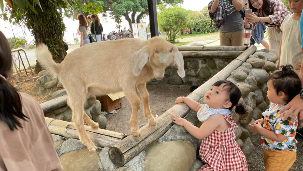 台南親子景點|仙湖農場,開放式動物園與無邊際泳池,搭配愜意花園,漫步遊玩在山間仙境|親子旅遊